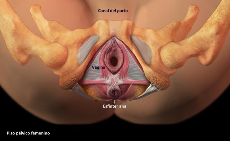 Imagen Gynecare Tvt Obturados System Video Distribuido Por Johnson